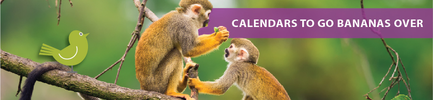 Exotic Animal Calendars | Global Animals Calendars | Monkey Calendars