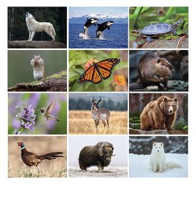 Wildlife 6-Sheet Desk Calendar