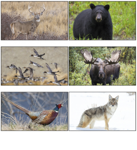 Wildlife (6-Sheet) Calendar