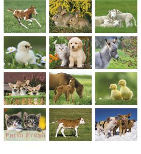 Baby Farm Animals Spiral Calendar