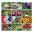 Garden Splendor 6-Sheet Desk Calendar