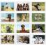 Puppy & Kittens Pocket Calendar