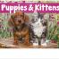 Puppy & Kittens Calendar