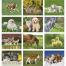 Baby Farm Animals Calendar