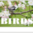 Birds of North America Calendar II