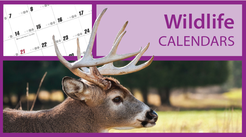 Wildlife Calendars | Wild Animal Calendars